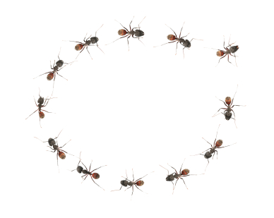 Image: Ants in a circle